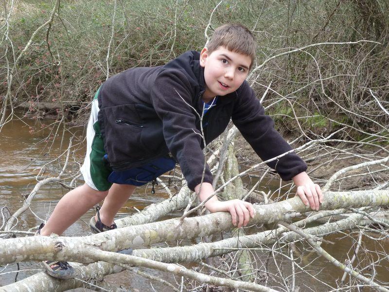 Birch Tree Adventure 008